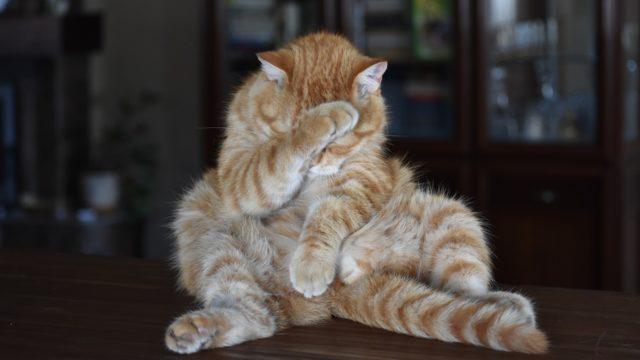 佐賀市で猫背改善・猫背矯正ならパーソナルジムMake&Spaceへお任せください