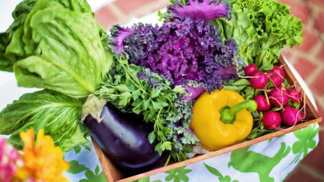 ダイエットに大切な三大栄養素って何?